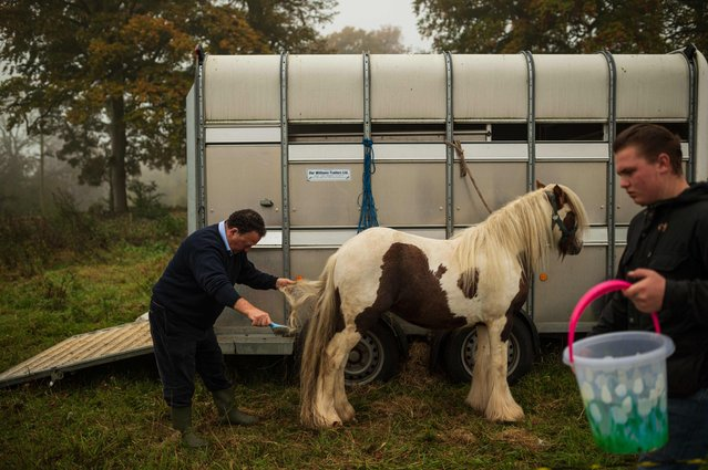 A man grooms a horse as he attempts to sell it at the biannual Stow Horse Fair in the town of Stow-on-the-Wold, southern England on October 24, 2019. (Photo by Oli Scarff/AFP Photo)