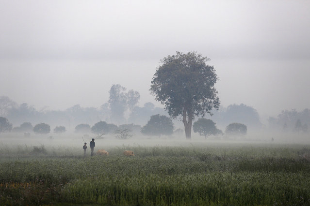 A man and a boy walk with their pigs in the morning mist at an agricultural field at village Kunda, outskirts of Allahabad, India, Wednesday, March 5, 2014. (Photo by Rajesh Kumar Singh/AP Photo)