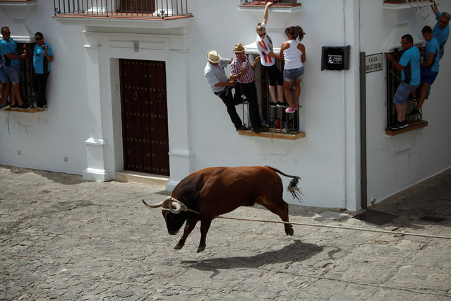 "People hold onto windows to avoid a bull, named Trompetero, during the ""Toro de Cuerda"" (Bull on Rope) festival in Grazalema, Spain, July 17, 2017. Three bulls restrained by a rope are allowed to run through the streets of the village during the annual festival. (Photo by Jon Nazca/Reuters)"