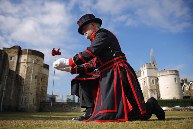 Crawford Butler, the longest serving Yeoman Warden at the Tower of London, poses with the first ceramic poppy to be 'planted' in the dry moat at Tower of London on July 17, 2014 in London, England. The poppy is the first of 888,246 created by artist Paul Cummins to represent the British Military personnel that died in the First World War. The display will be installed by a team of volunteers from across the UK with the last to be put in place on Armistice Day on November 11, 2014. (Photo by Dan Kitwood/Getty Images)
