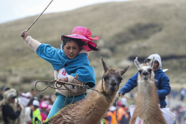 Milena Jami whips her llama to win the first place in the a race for children of ages seven and eight at the Llanganates National Park, Ecuador, Saturday, February 8, 2020. Wooly llamas, an animal emblematic of the Andean mountains in South America, become the star for a day each year when Ecuadoreans dress up their prized animals for children to ride them in 500-meter races. (Photo by Dolores Ochoa/AP Photo)
