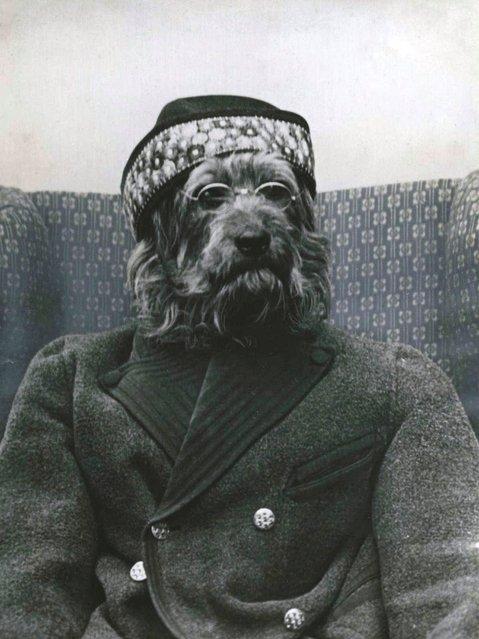 Hond als oude man, 1934. Collectie Spaarnestadarchief. (Photo by Het Leven)
