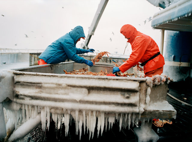 After a full crab pot is pulled up, the crew loads it on the deck with the help of a crane. Then they sort through the crabs at the crab-sorting table. Anything that isn't a legal-size crab (crabs must grow to a certain size before they can be caught) gets thrown back. (Photo by Corey Arnold)