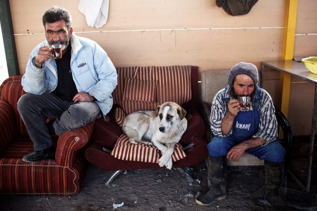 Workers of Vafa animal shelter drink a cup of tea during a break on February 19, 2016 in the town of Hashtgerd, some 70kms (43 miles) west of the capital Tehran. Vafa, the first animal shelter in Iran, is a non-government charity that relies on private donations and volunteers and it is currently providing shelter to more than 700 injured and homeless dogs. (Photo by Behrouz Mehri/AFP Photo)