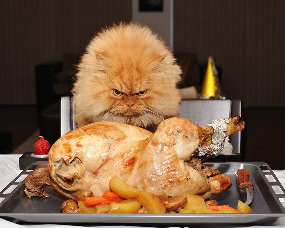 Meet Garfi, the Angriest Cat on the Internet