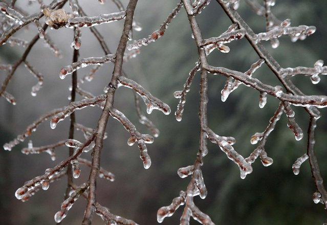 Branches of a tree are covered with ice near Amstall in northern Austria, December 2, 2014. (Photo by Heinz-Peter Bader/Reuters)