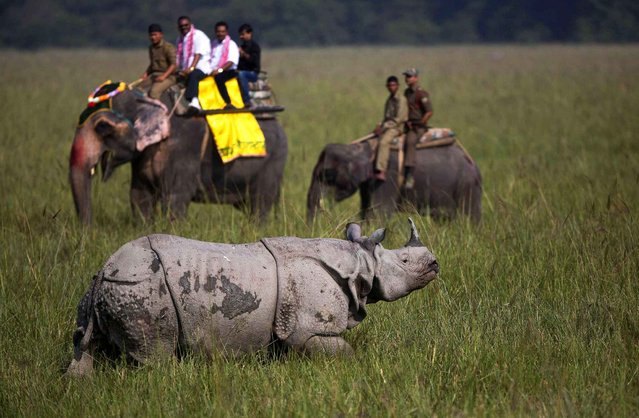 Tourists look at an Indian one-horned rhinoceros at the Pobitora Wildlife Sanctuary, some 55 kilometers east of Gauhati, India, Saturday, October 31, 2015. The sanctuary, which is known for the Indian one-horned rhino population, reopened for tourists Saturday. The sanctuary closes annually during the rainy season. (Photo by Anupam Nath/AP Photo)