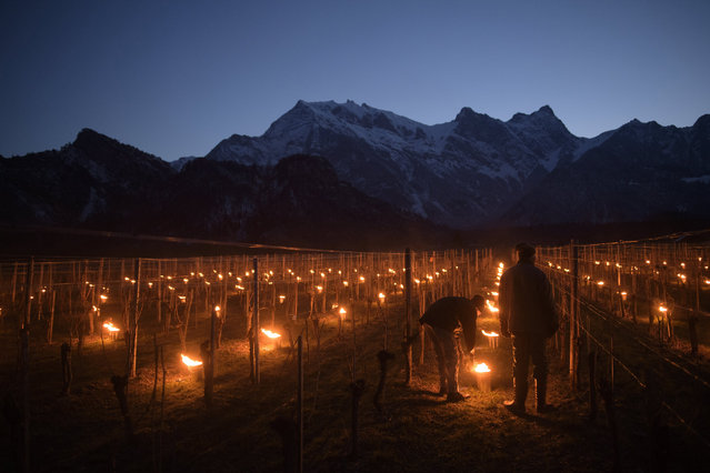 "So-called frost candles are lit in a vineyard in Flaesch, Graubuenden, Switzerland, 22 March 2018. After the frost nights of 2016 and 2017 caused damage to crops, the ""Plantahof"" local agricultural school is conducting trials to determine the value of measures like frost-candles. (Photo by Gian Ehrenzeller/EPA/EFE)"