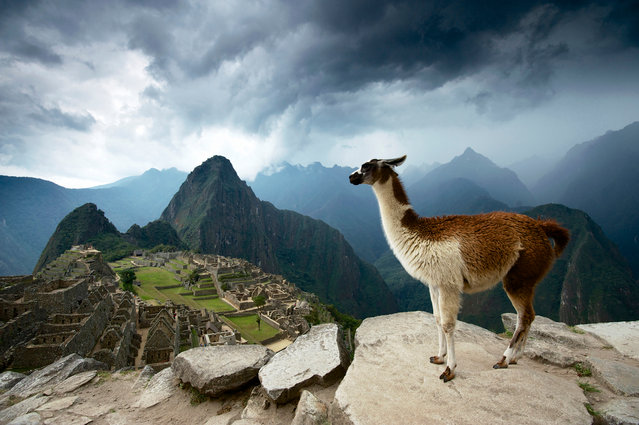 Machu Picchu, Peru. A llama's-eye view of the legendary Inca settlement at Machu Picchu, isolated high in the Peruvian Andes. (Photo by Jim Turner/National Geographic)