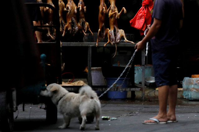 A man walks with his pet dog as he talks to a vendor who sells dog meat at a market during the local dog meat festival in Yulin, Guangxi Zhuang Autonomous Region, China on June 21, 2018. (Photo by Tyrone Siu/Reuters)