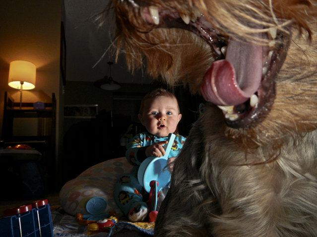 """The Boy and the Beast"". To me, this image defines spontaneous. Spontaneous in that it was taken at about 1:30am after my 7 month old son decided he wanted to wake up and play with some toys. Spontaneous in that I decided at 1:30 in the morning to test my ability to trigger an off camera flash with the Nikon point and shoot I took this picture with. And spontaneous in that our dog Molly decided to walk in front of the camera and yawn the moment I took this shot. I love this picture. Our dog is being lit by the small flash on the point and shoot, my son is being lit by a hot shoe flash set to slave mode. Location: Issaquah, WA USA. (Photo and caption by Eric Krebs/National Geographic Traveler Photo Contest)"