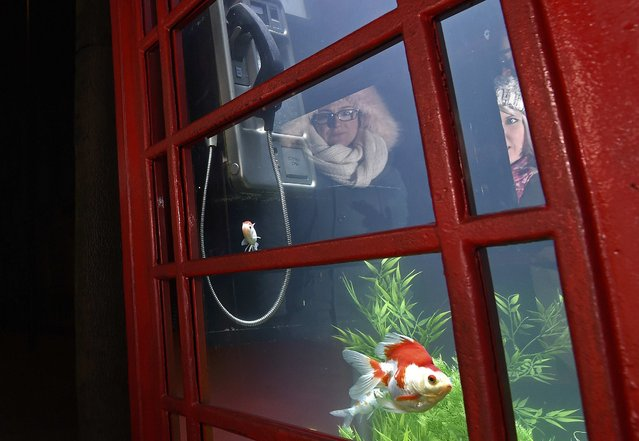 "Spectators are reflected as they look at fish swimming in water inside a modified traditional British telehone box in an art piece entitled ""Aquarium"" by Benedetto Bufalino and Benoit Deseilleas, as part of the ""Lumiere"" festival in London, Britain January 14, 2016. (Photo by Toby Melville/Reuters)"