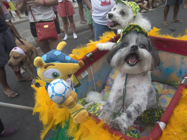 "Dogs stand next to ""Fuleco"", the official mascot of the 2014 FIFA World Cup, during the ""Blocao"" dog carnival in Rio de Janeiro. (Photo by Silvia Izquierdo/AP Photo)"