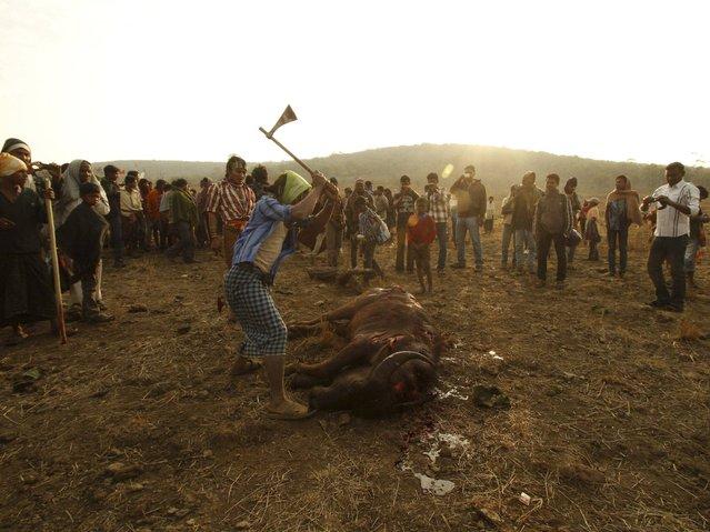 Members of Dongria tribe sacrifice a buffalo during the two-day long Niyamraja Festival atop the Niyamgiri hills near Lanjigarh in Kalahandi district, Orissa state. (Photo by Biswaranjan Rout/AP Photo)
