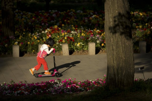 A Chinese girl rides her scooter past a bed of blooming flowers at the Fragrant Hills Park in suburban Beijing, Monday, May 4, 2015. The park, once the home of imperial gardens for China's emperors, is now an attraction popular with both locals and tourists in Beijing. (Photo by Mark Schiefelbein/AP Photo)