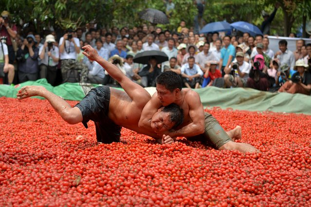Contestants wrestle in a pool of tomatoes during a local culture and tourism festival in Tianyang, Guangxi Zhuang Autonomous Region, China, April 14, 2016. (Photo by /Reuters)