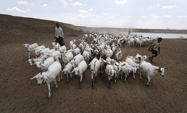 A herder drives his animals away after watering them at one of the few watering holes in the area, near the drought-affected village of Bandarero, near Moyale town on the Ethiopian border, in northern Kenya, Friday, March 3, 2017. (Photo by Ben Curtis/AP Photo)
