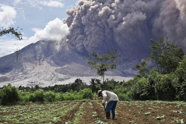 A farmer tends to his field as Mount Sinabung releases pyroclastic flows in Tiga Pancur, North Sumatra, Indonesia, Saturday, June 13, 2015. The volcano, which was put on it highest alert level last week, has sporadically erupted since 2010 after being dormant for 400 years. (AP Photo/Binsar Bakkara)