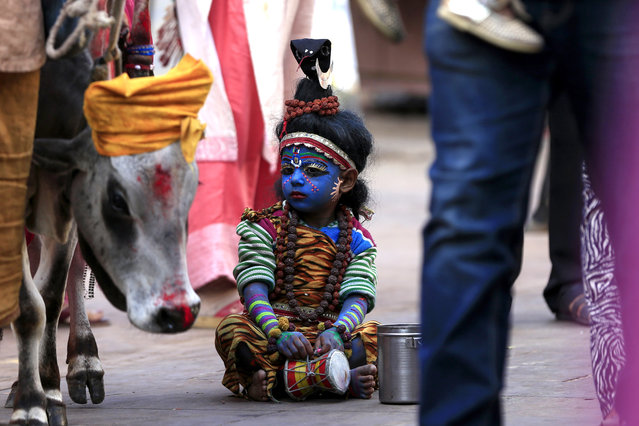 A young child dressed as the Hindu deity Shiva looks at a cow while waiting for alms from pilgrims in Pushkar in the western Indian state of Rajasthan on October 24, 2019. (Photo by Himanshu Sharma/AFP Photo)