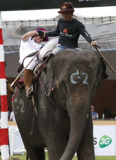 Elephant polo competitor British woman Carolyn Syangbo from team Mercedes-Benz Thailand slips off her elephant and is helped to regain her seat by the Thai mahout on first day's play in the King's Cup Elephant Polo Tournament 2014 held near Bangkok, in Samut Prakan province, Thailand, 28 August 2014. (Photo by Barbara Walton/EPA)