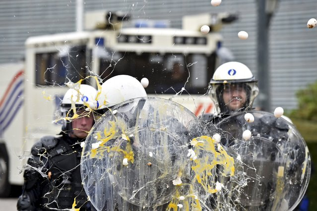 Policemen are hit by eggs as farmers and dairy farmers from all over Europe take part in a demonstration outside a European Union farm ministers' emergency meeting at the EU Council headquarters in Brussels, Belgium September 7, 2015. Thousands of farmers gathered in the European capital calling for more help with low prices and high costs. (Photo by Eric Vidal/Reuters)