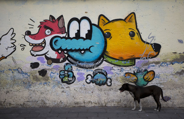 A dog stands beside street graffiti in Xochimilco, on the southern edge of Mexico City, Wednesday, May 7, 2014. (Photo by Rebecca Blackwell/AP Photo)