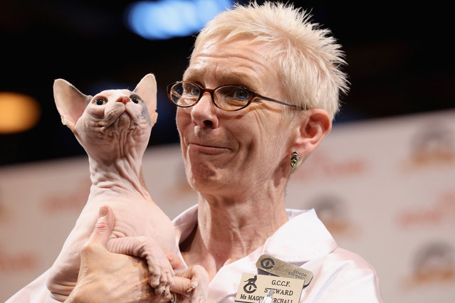 A steward hold s a Sphinx cat during the Governing Council of the Cat Fancy's 'Supreme Championship Cat Show' at the NEC Arena on October 24, 2015 in Birmingham, England. The one-day Supreme Cat Show is one of the largest cat fancy competitions in Europe with hundreds of cats being exhibited. Exhibitors aim to have their cat named as the show's 'Supreme Exhibit' from the winners of the individual categories of: Persian, Semi-Longhair, British, Foreign, Burmese, Oriental, Siamese. (Photo by Christopher Furlong/Getty Images)