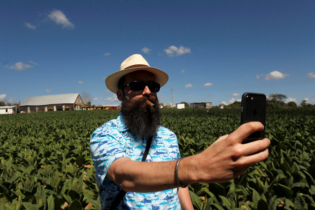 A cigar enthusiast takes a selfie at a tobacco farm in Pinar del Rio province, Cuba on February 28, 2018. (Photo by Reuters/Stringer)