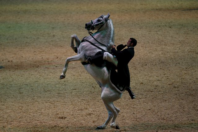 A rider performs during the opening show of the Sicab International Pre Horse Fair which is dedicated in full and exclusively to the purebred Spanish horse in the Andalusian capital of Seville, southern Spain, November 17, 2015. (Photo by Marcelo del Pozo/Reuters)