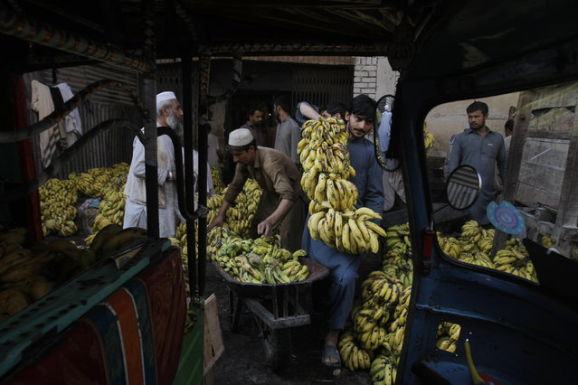 Pakistani vendors collect bunch of  bananas to be auctioned at a fruit market in Peshawar, Pakistan, Thursday, October 6, 2016. (Photo by Mohammad Sajjad/AP Photo)