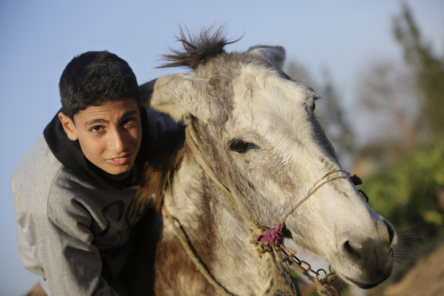 In this Friday, February 5, 2016 picture, Ahmed Ayman, 14, and his donkey start their daily training in the Nile Delta village of Al-Arid about 150 kilometers north of Cairo, Egypt. By chance, he discovered her unique talent: the ability to leap over a hurdle like a horse. (Photo by Amr Nabil/AP Photo)