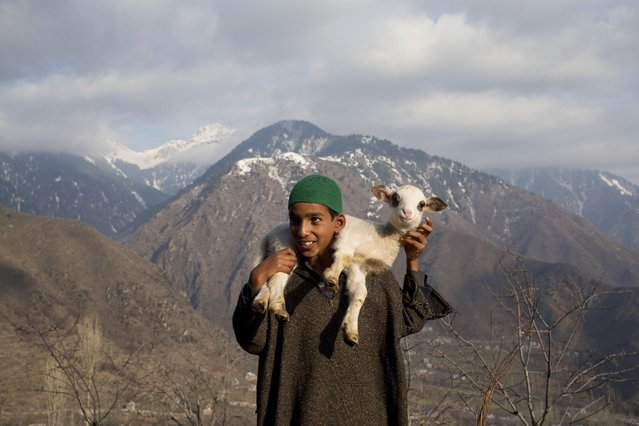 Ahmed, a young Kashmiri shepherd boy carries a lamb on his back in Astanpora, some 25 Kilometers from Srinagar, Indian controlled Kashmir, Wednesday, March 25, 2015. Sheep rearing is popular in the state of Jammu and Kashmir. (Photo by Dar Yasin/AP Photo)