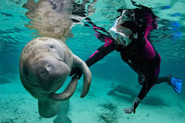 This is the adorable moment a teenager became friends with a gentle ocean giant. (Photo by Caters News)