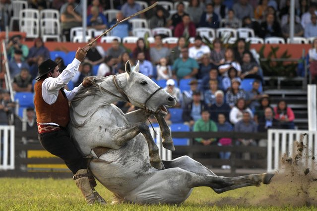 A gaucho falls from a bucking colt during the traditional rodeo week in Montevideo, Uruguay on April 14, 2019 (Photo by Pablo Porciuncula Brune/AFP Photo)