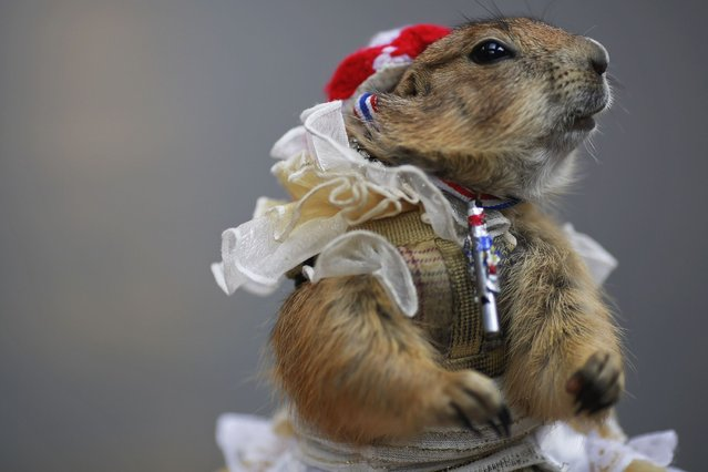 A pet prairie dog wears a whistle and a ribbon in Thailand's national colours, symbols of anti-government protesters, as it is placed by its owner at one of the protesters' encampment for people to take pictures, in Bangkok's shopping district, on March 1, 2014. (Photo by Damir Sagolj/Reuters)