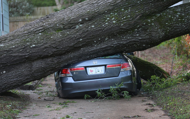 A large tree is seen resting on a car after a tornado struck on Monday, on April 30, 2014 in Tupelo, Mississippi. Deadly tornadoes ripped through the region over the last days, leaving more than a dozen dead. (Photo by Joe Raedle/AFP Photo)
