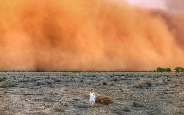 This handout photo taken on January 17, 2020 and received on January 20 courtesy of Marcia Macmillan shows a child running towards a dust storm in Mullengudgery in New South Wales. Dust storms hit many parts of Australia's western New South Wales as a prolonged drought continues. (Photo by Courtesy of Marcia Macmillan/Handout via AFP Photo)