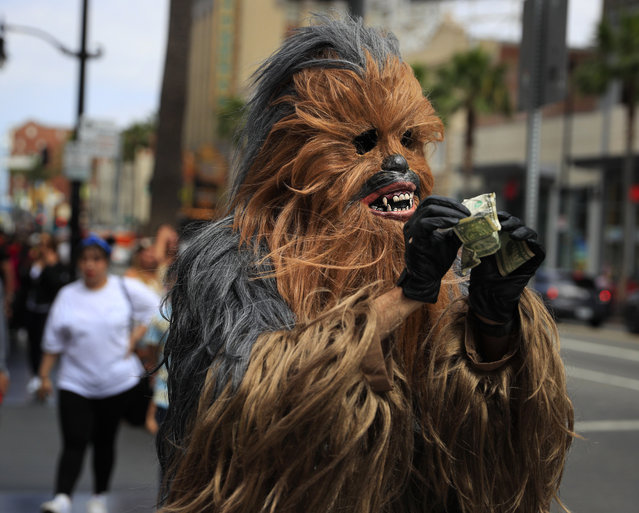 In this Thursday, May 25, 2017 photo, Donte, a musician who only gave his first name, straightens out dollar bills on his first day in a brand new Chewbacca costume purchased from eBay for $441, in the Hollywood section of Los Angeles. Donte said he replaced the old one because he wasn't making any money with it. (Photo by Jae C. Hong/AP Photo)