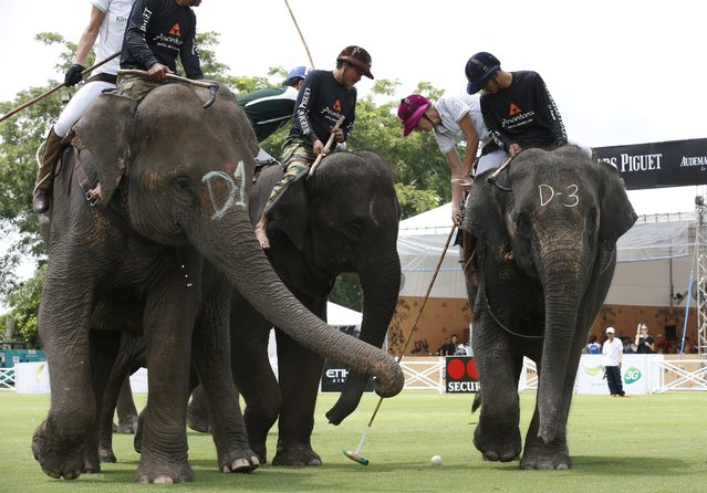 Elephant polo competitors from Mercedes-Benz Thailand and The Peninsula  battle for the ball on first day's play at the King's Cup Elephant Polo Tournament 2014 held near Bangkok, in Samut Prakan province, Thailand, 28 August 2014. (Photo by Barbara Walton/EPA)