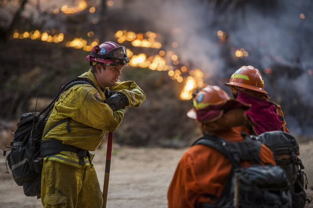A firefighter with Cal Fire chats with crew members of California Department of Corrections at a wildfire, Thursday September 10, 2015, near Jackson, Calif. (Photo by Andrew Sent/The Sacramento Bee via AP Photo)