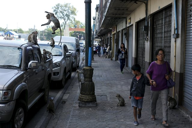 People walk along a street with long-tailed macaques in Lopburi, north of Bangkok November 29, 2015. (Photo by Jorge Silva/Reuters)
