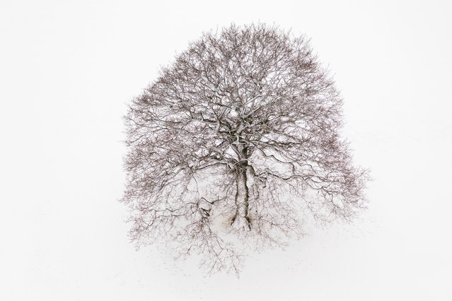 A lone tree stands in a snow covered field on February 08, 2021 near Canterbury, United Kingdom. Heavy snow in Scotland and South East England over this weekend kick start a week of freezing temperatures across many parts of the UK. (Photo by Dan Kitwood/Getty Images)