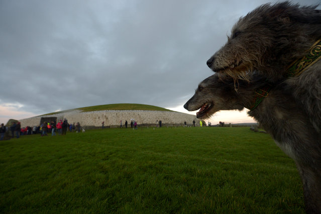 Irish Wolfhound dogs are seen during winter solstice at the 5000 year old stone age tomb of Newgrange in the Boyne Valley at sunrise in Newgrange, Ireland, December 21, 2016. (Photo by Clodagh Kilcoyne/Reuters)