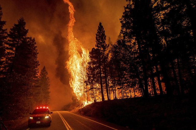 Flames leap from trees as the Dixie Fire jumps Highway 89 north of Greenville in Plumas County, Calif., on Tuesday, August 3, 2021. Dry and windy conditions have led to increased fire activity as firefighters battle the blaze which ignited July 14. (Photo by Noah Berger/AP Photo)