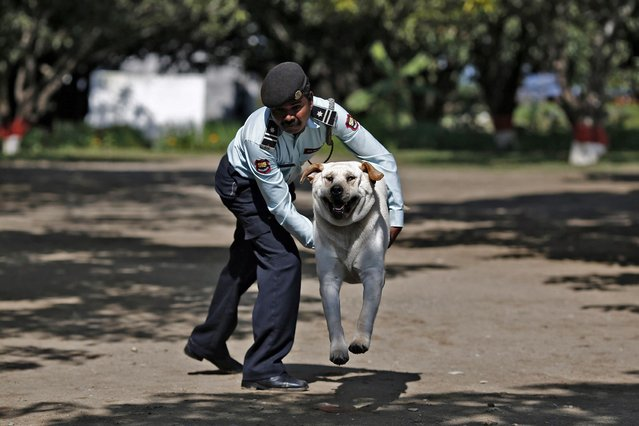 A man trains his dog during a training session at the training academy of the Security and Intelligence Services (India) firm, at Dehradun in the Himalayan Indian state of Uttarakhand. (Photo by Adnan Abidi/Reuters)