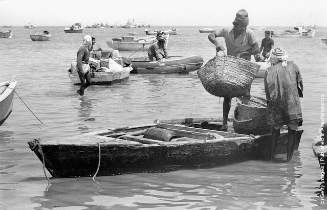 Bedouin Arab fishermen bring in their catch June 3, 1975 on Lake Bardawil