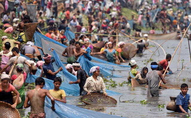 People take part in a community fishing session during the Rongali Bihu festival celebrations at Digholi lake in Nagaon district, in the northeastern state of Assam, April 13, 2017. (Photo by Anuwar Hazarika/Reuters)