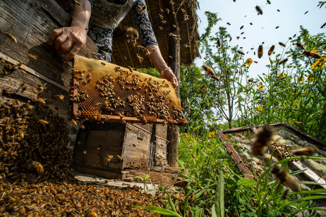 A selection of winning images from the Pink Lady food photographer of the year awards. Here: Food in the field – When the Hive is Filled by Xiaodong Sun, China. (Photo by Sun Xiaodong/Pink Lady Food Photographer Award 2020)