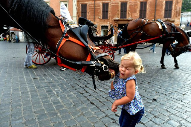 """A little girl reacts as a horse from a """"Botticelle"""", a traditional horse-drawn carriage, tries to catch her at Piazza di Spagna on October 2, 2014 in Rome. The Botticelle are the traditional Roman carriages used by tourists to sight Rome's historical center. (Photo by Alberto Pizzoli/AFP Photo)"""