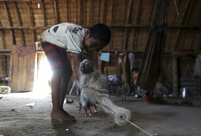 An indigenous boy plays with a monkey inside his house in their village at Xingu national park in Mato Grosso, Brazil, October 2, 2015. (Photo by Paulo Whitaker/Reuters)